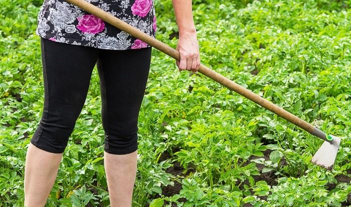 Если нет перчаток для работы в огороде, намотайте на рукоять инструмента пищевую пленку / Фото: pbs.twimg.com