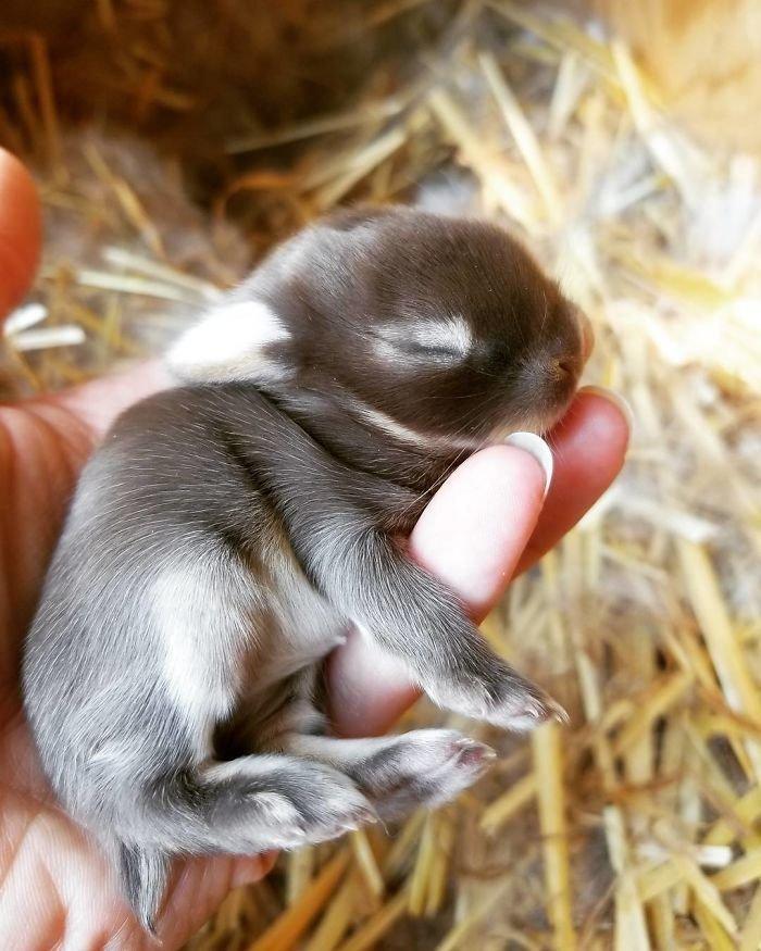6. Кролики это не только ценный мех, детеныш, детеныши, детеныши животных, кролик, кролики, пушистый позитив, ушастый