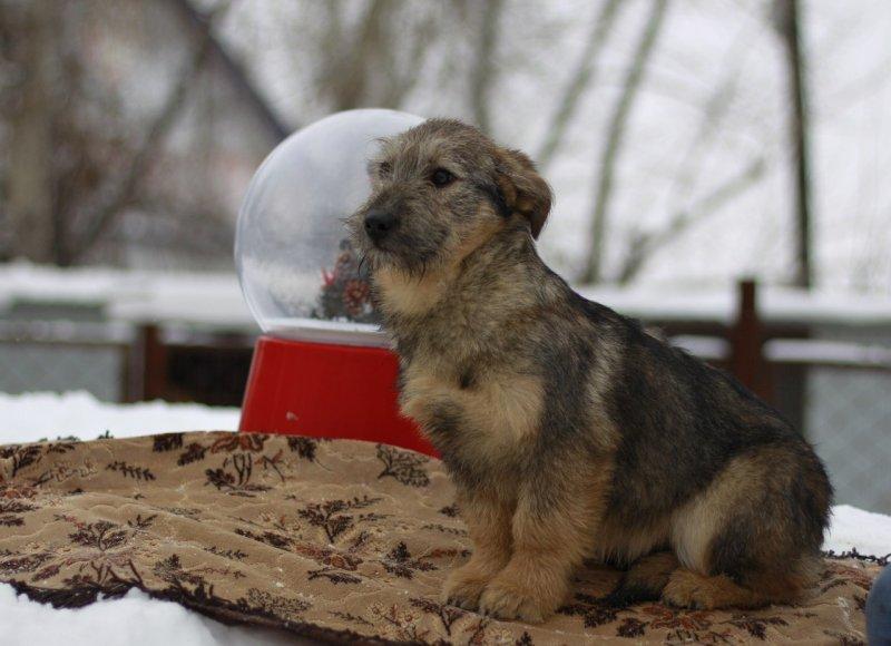 Щенок чудом спасся от догхантеров догхантер, собака, щенок