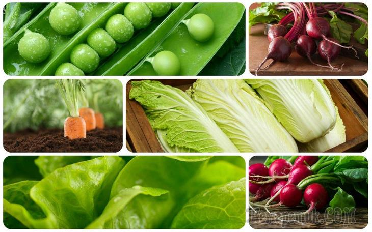 7 быстрорастущих растений для осеннего огорода