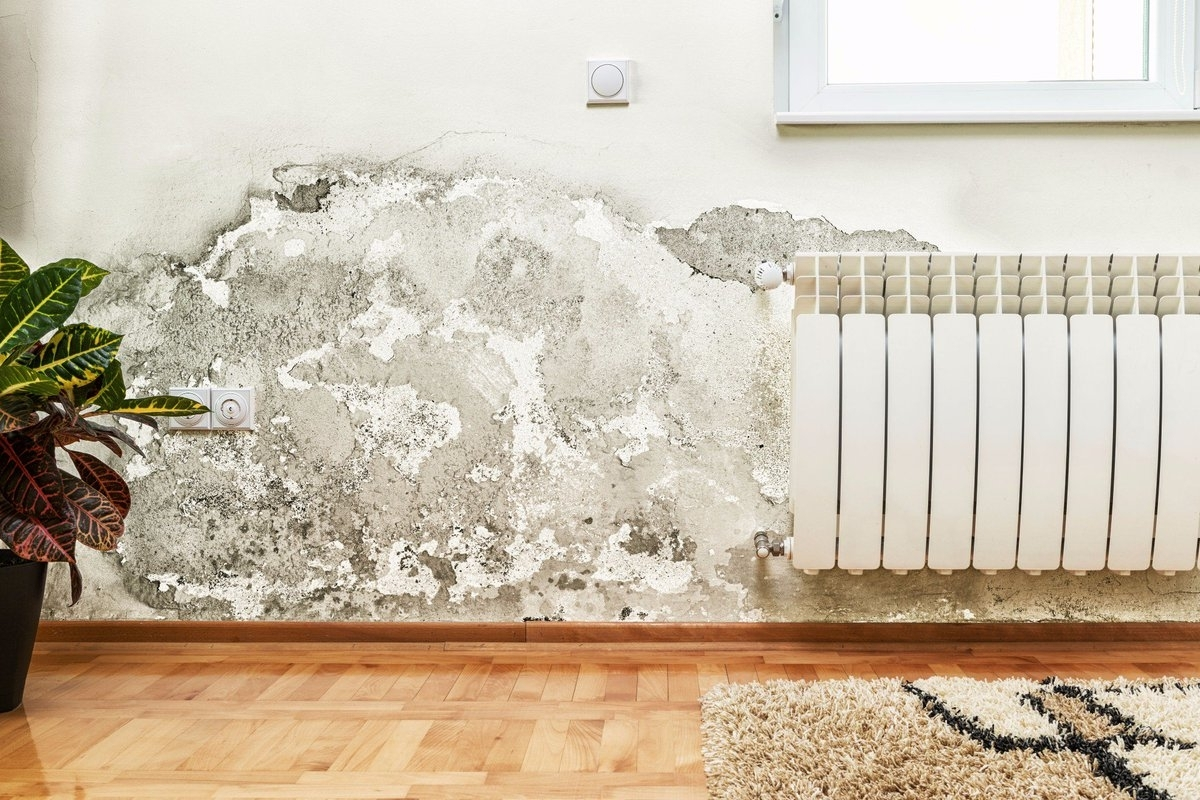 Как развести медный купорос от плесени (грибка) на стенах