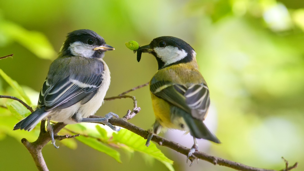 Птицы охотно питаются тлей
