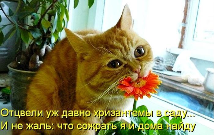Доброго утра, цветы с надписями смешные картинки