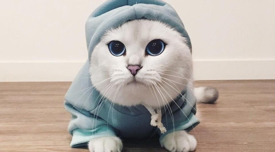 Как приучить котнка или взрослую кошку к когтеточке