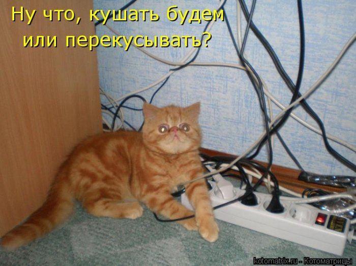 Любимой девушке, картинки кошки пора жрать приколы