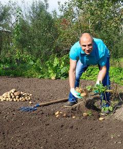 Как получить ведро картофеля с одного куста