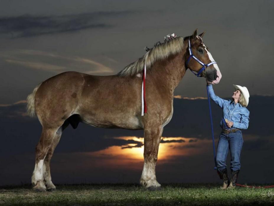 world's largest horse - 720×540