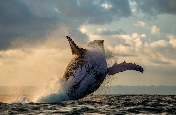 С возрастом киты обмениваются более сложной информацией
