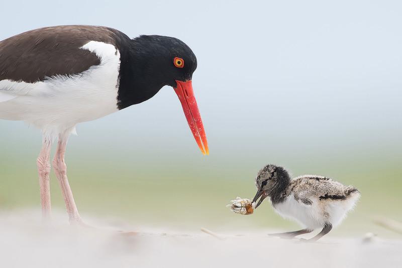 Прекрасные птицы от прекрасных фотографов