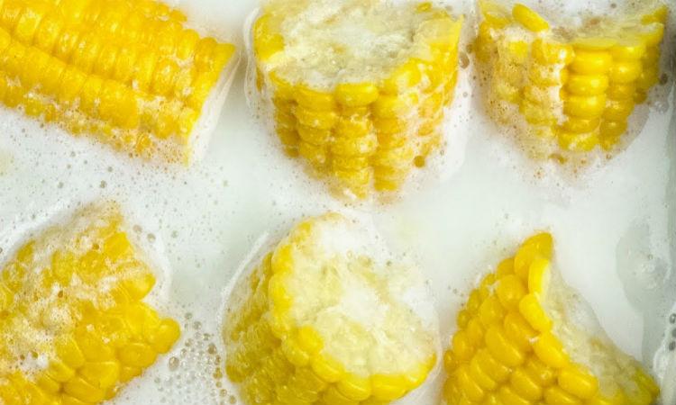 Варим кукурузу в молоке: вдвое сочнее обычного