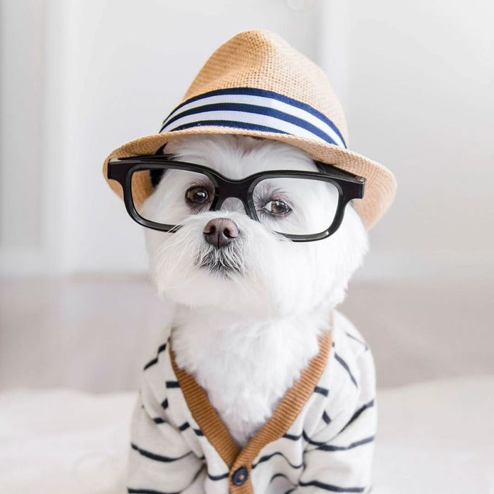 Тоби — собака-хипстер, которая одевается лучше, чем вы
