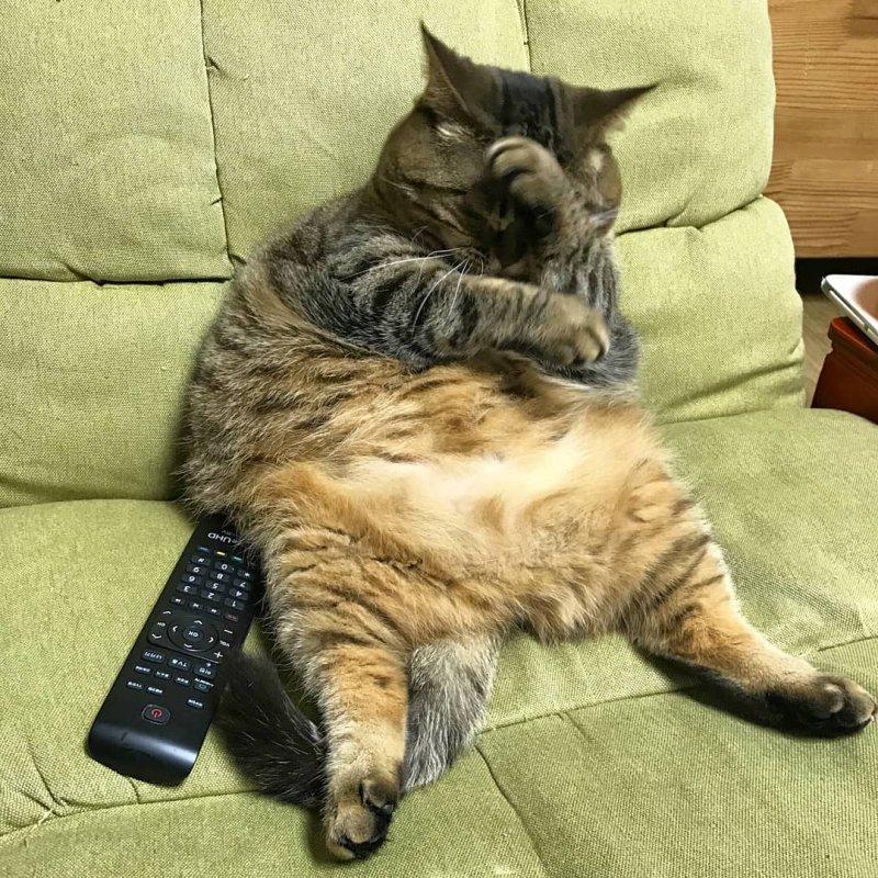 Картинки прикольных котов жирных, хорошего воскресного