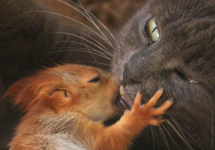 Крымская кошка Пуша приняла на воспитание четырех бельчат белки, животные, история, кошка, милота, фотографии
