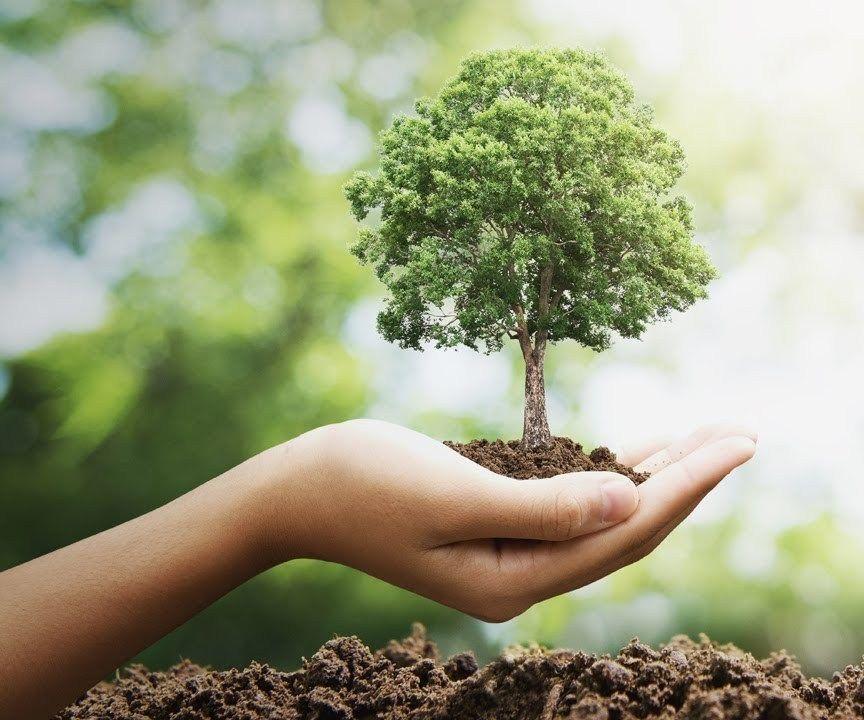 Как защитить сад от стихий 2020 года