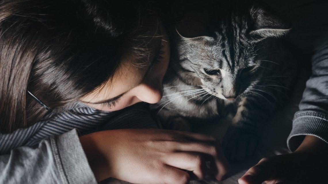 История из жизни: как кошка …
