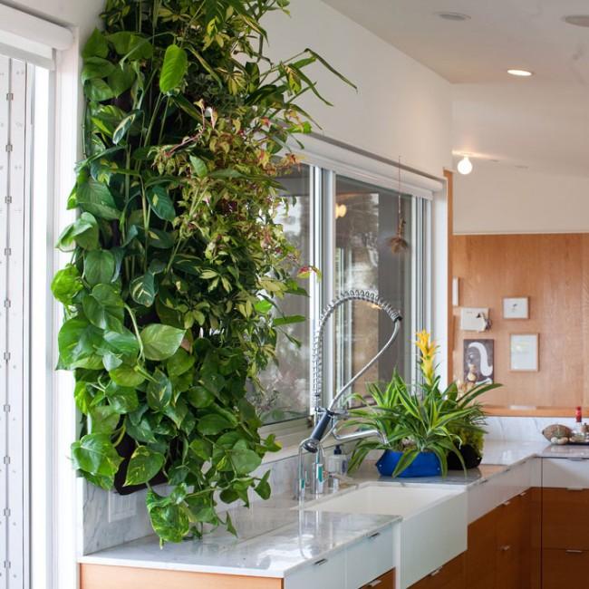 Живой декор стен кухни вертикальным озеленением