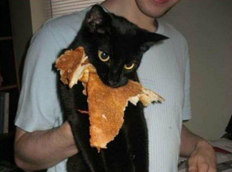 Не всё коту Масленица... врасплох, кошки, смешные, собаки, фото, шкодники