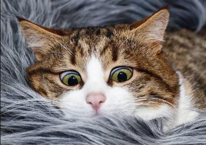 Этот котик знает, что такое счастье, несмотря на сломанный позвоночник