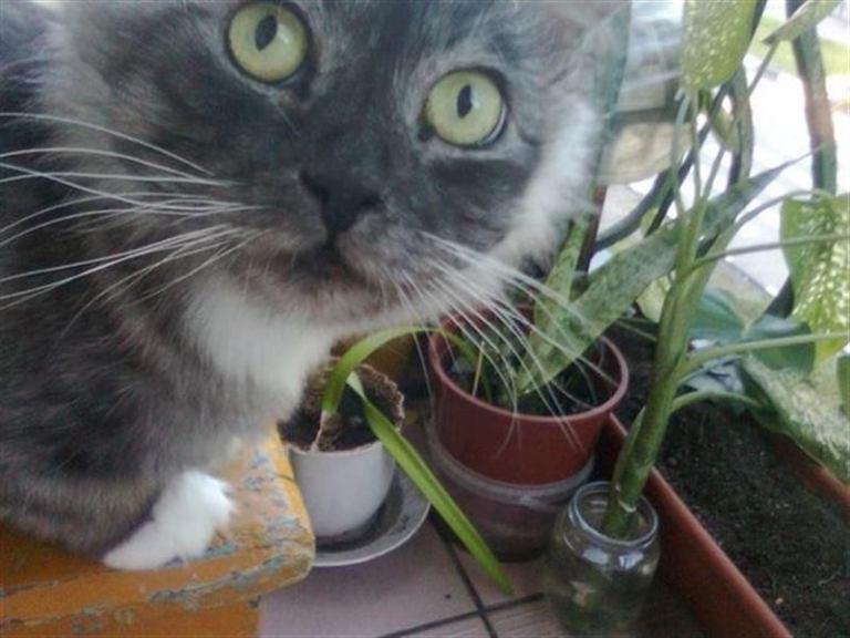 Несчастный кот, которого забрали из приюта, превратился в прекрасного питомца!