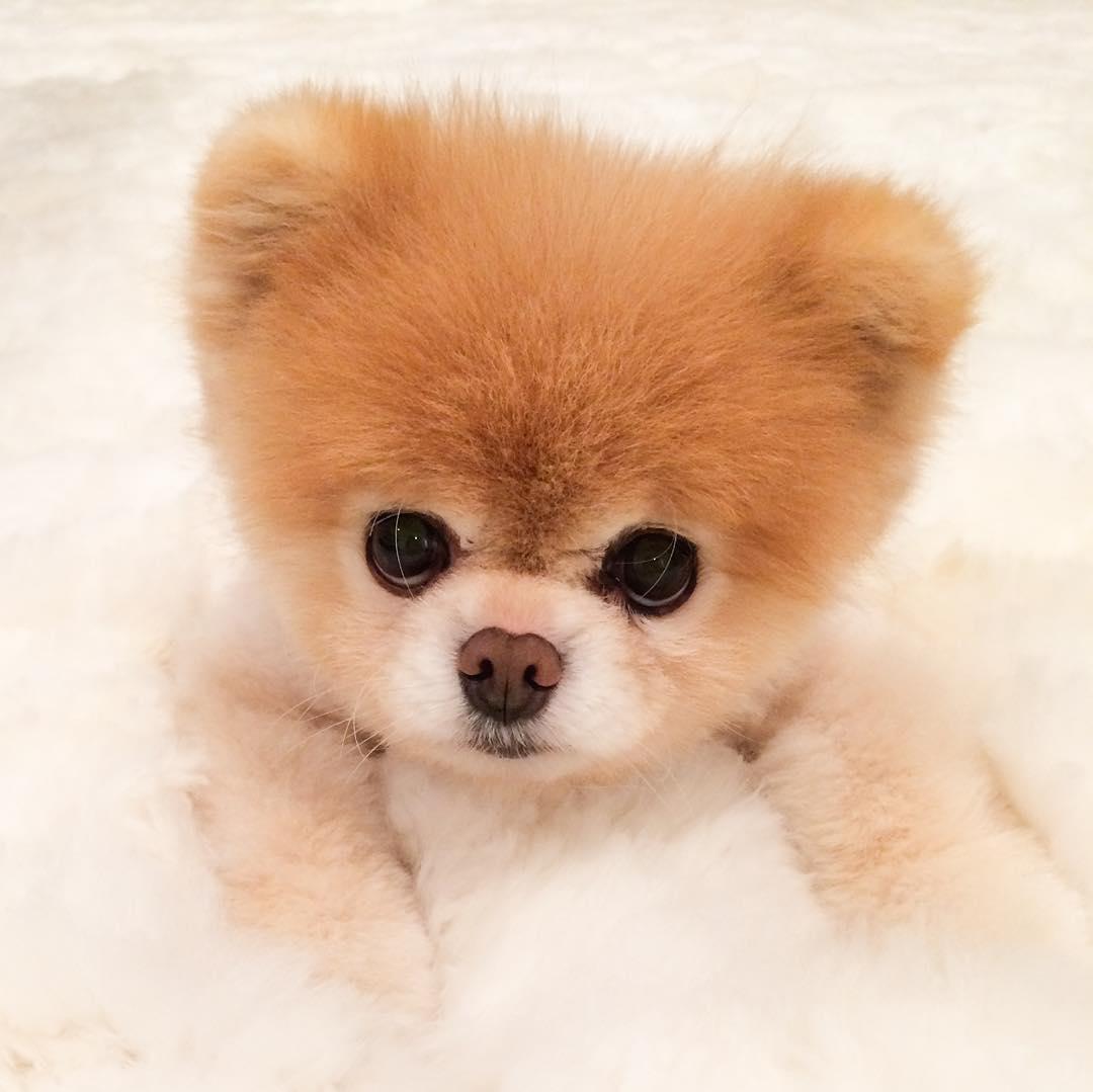 Картинка самой милой собаки, страшные открытки