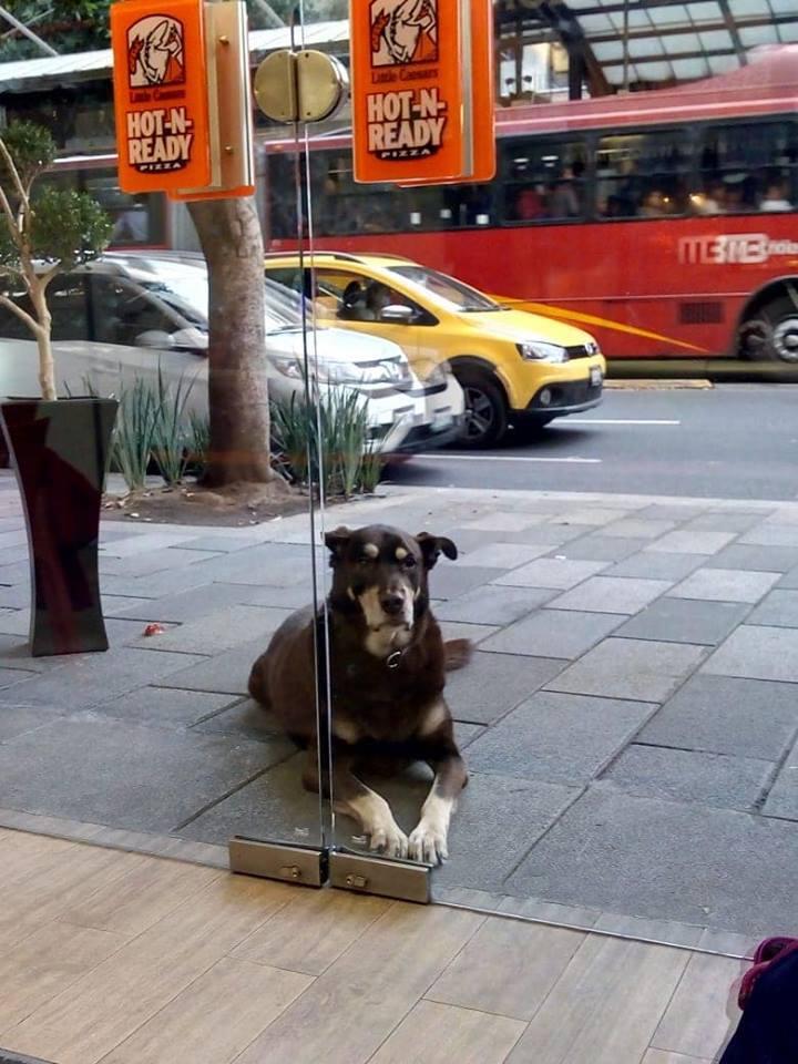 собака за дверями