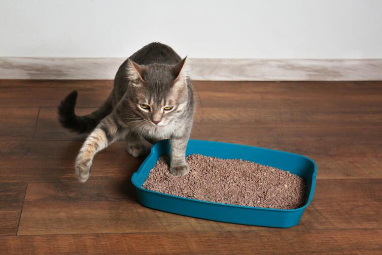 Почему кошка игнорирует свой лоток и как избавиться от запаха кошачьей мочи в доме? запах, может, следует, животное, нужду, кошачьей, ходить, лотка, место, лоток, запаха, кошка, домашний, туалет, стресс, кошки, случае, игнорировать, поэтому, нужно