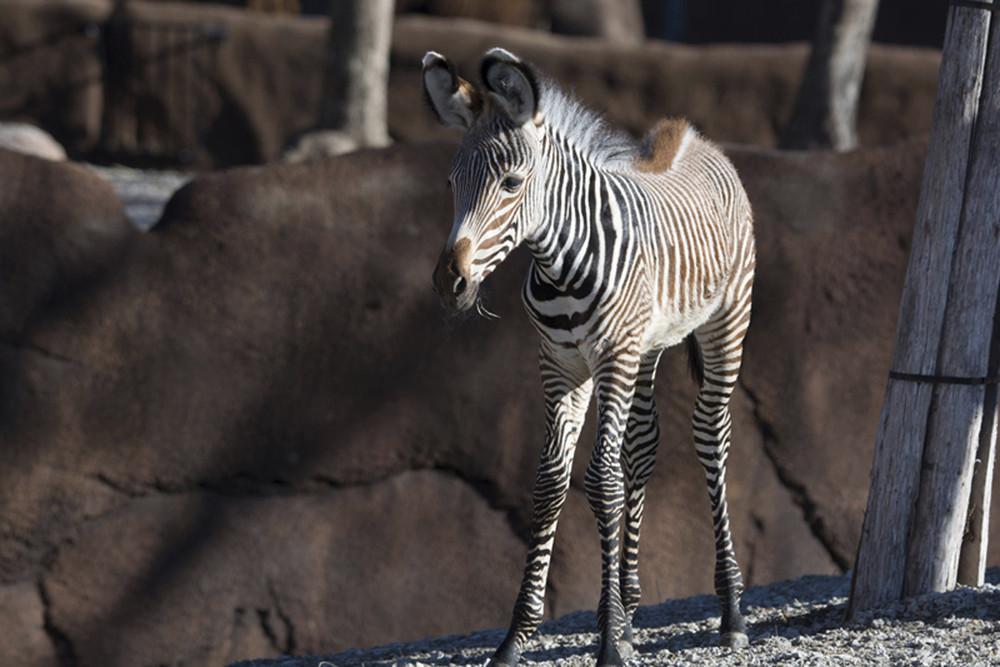 Интересные фотографии с животными, которые были сделаны на прошлой неделе животные