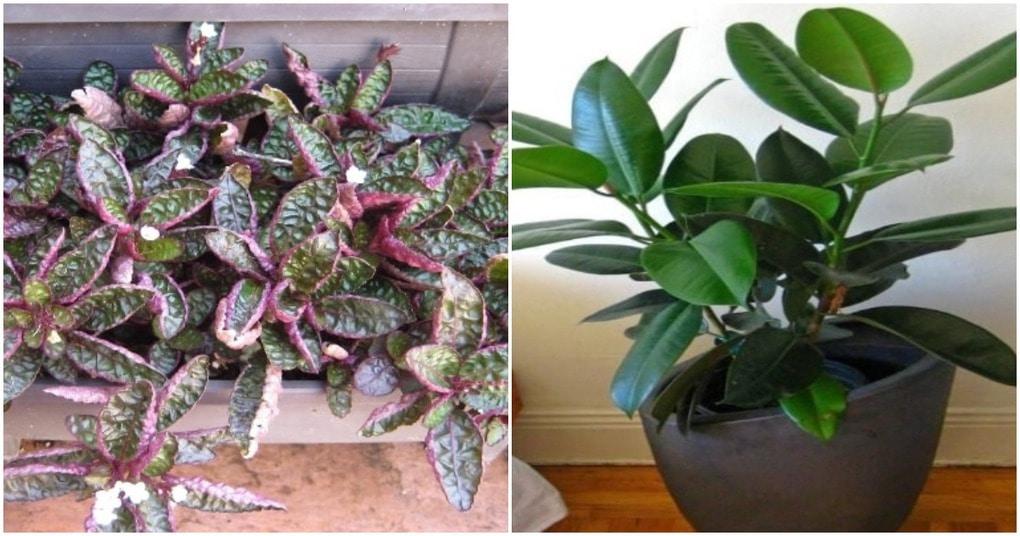 8 комнатных растений, которые очищают воздух