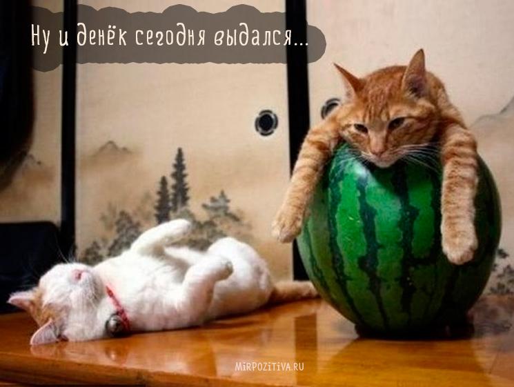 Самые красивые породы кошек в мире: описание