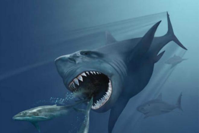 Как выглядел реальный мегалодон: ученые впервые показали вымершее чудовище