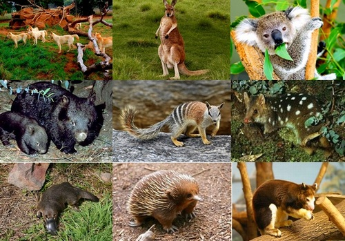 Самые красивые животные Австралии