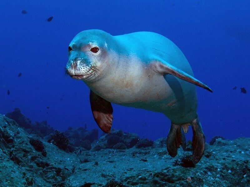канал фото исчезающих животных морских лесной муравей