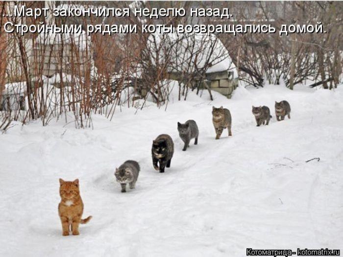 Забавные животные.Котодром -31 от Михалыча