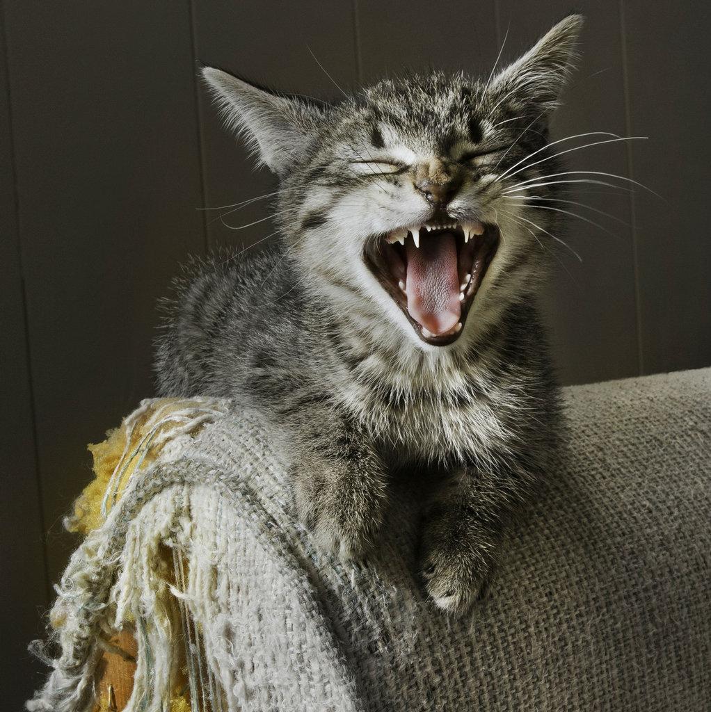 Когти прочь от мебели! 7 простых советов для владельцев кошек