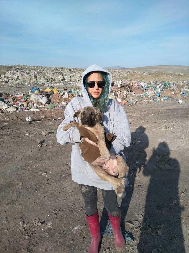 Почти 1000 собак пытаются выжить на этой свалке. Им помогала лишь одна 23-летняя девушка