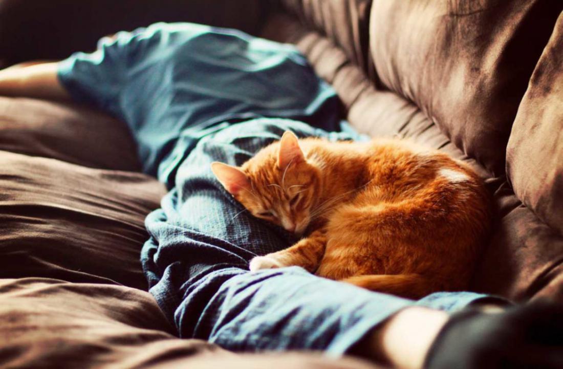 Почему нужно пускать домашних животных к себе в постель