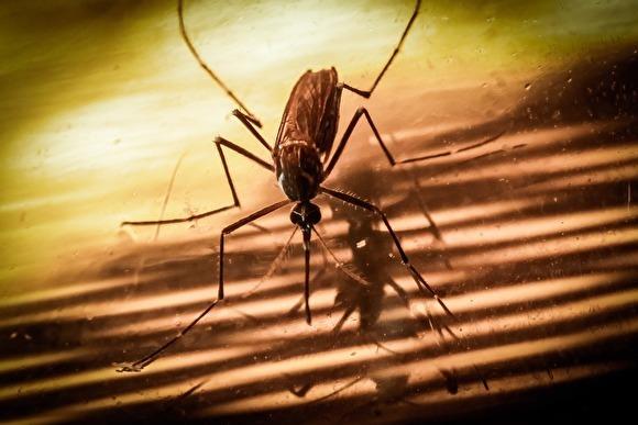 «Известия»: на юге РФ появились комары-переносчики опасных тропических заболеваний