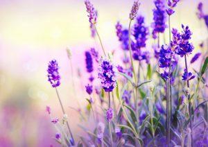 Аптекарский огород: самые полезные лекарственные растения для дачи здоровье,лекарственные растения,полезные советы
