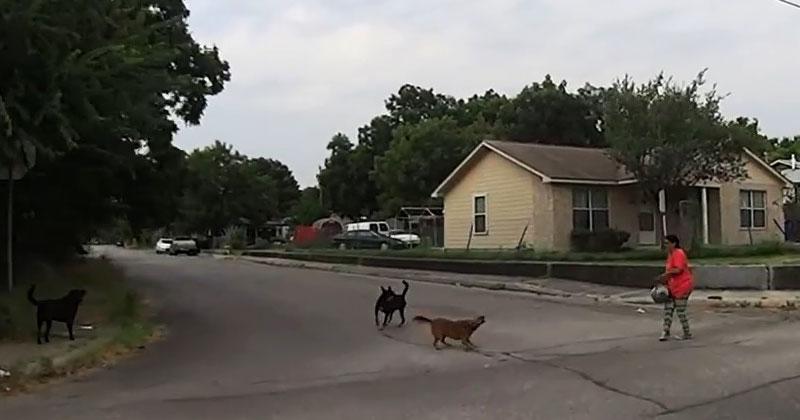 На женщину напала стая агрессивных собак. Проезжающий мимо байкер сделал нечто совершенно неожиданное!