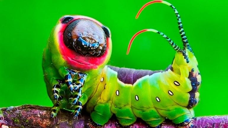 10 необычных насекомых на планеты