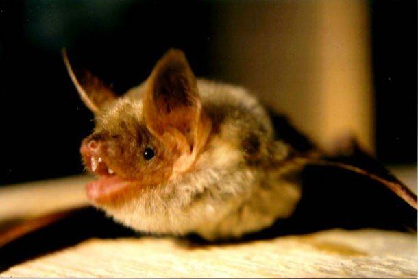 Летучие мыши: любопытные факты, о которых вы не знали