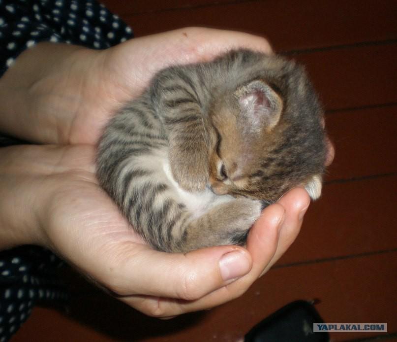 Спасение котенка!