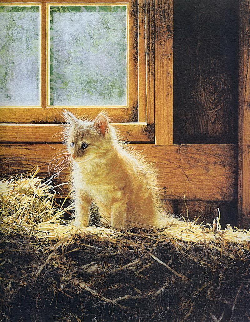 цены коты фото на сеновале про основные варианты