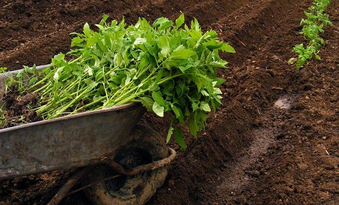 Высадка рассады в грунт – о чем должен знать каждый