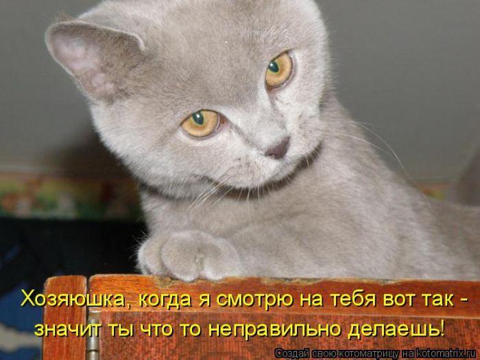 Картинки приколы с животными и надписями онлайн программа