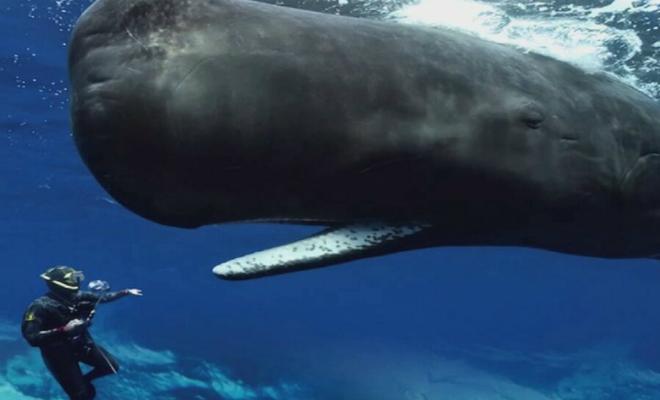 Повелитель глубин кашалот: самое неизученное животное Мирового океана Культура