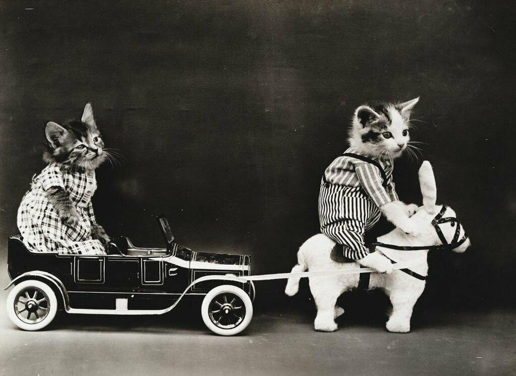 Фотографии котов, которые удивляют публику не одно столетие! животные,кошки,фотография