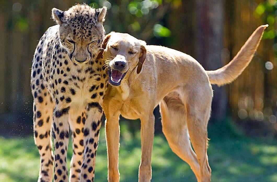 фотки дружбы животных помешало китайским репортёрам