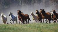 Притча. Про коня