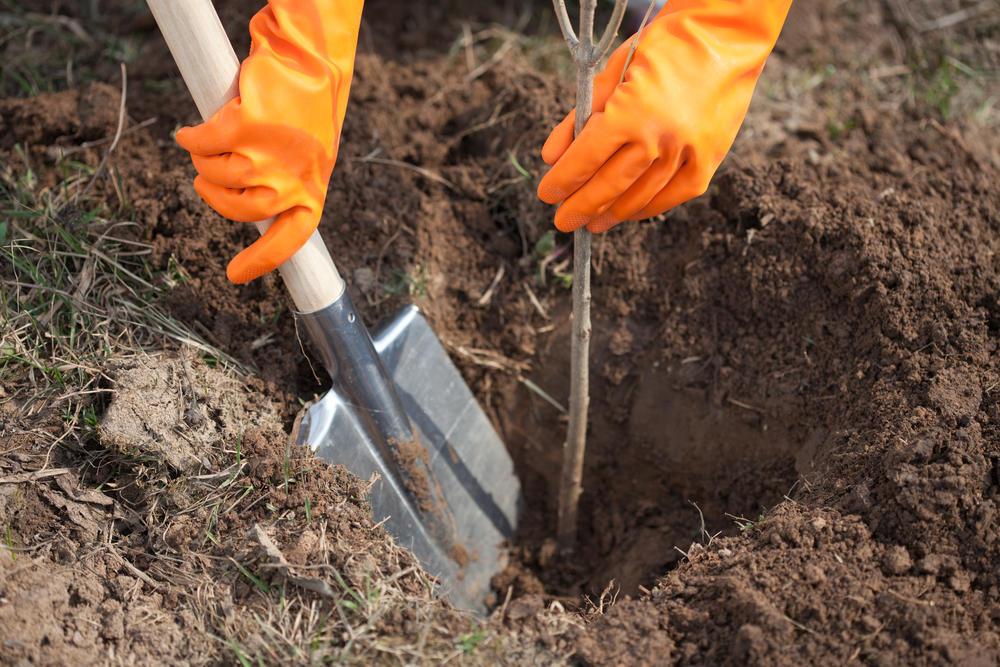 Осенняя посадка деревьев и кустарников: плюсы и минусы, сроки, какие лучше сажать